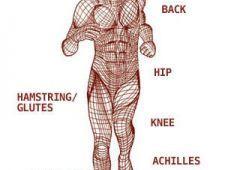 Taijiquan in fascia – ključni dejavnik gibanja in strukture: I. del